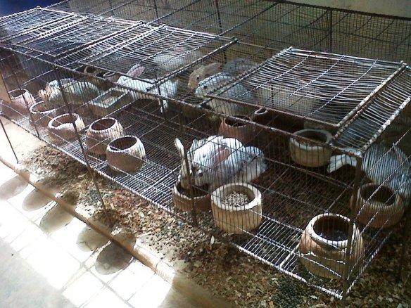 Cage  d'engraissement  contenant 17  lapins C