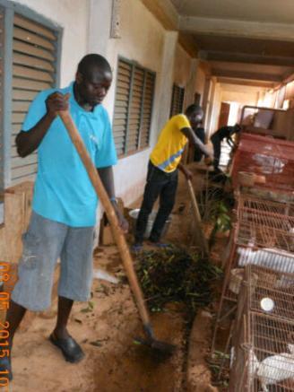 Séance de nettoyage à la lapinière