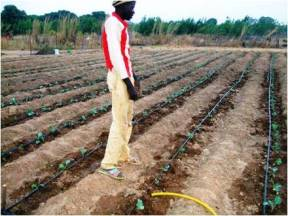 Issa observe le système d'irrigation